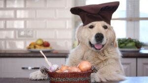 can dogs eat onions? Toxic foods for dogs