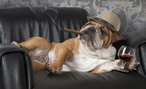 is alcohol bad for dogs? Toxic foods for dogs