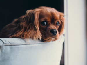 dog separation anxiety help