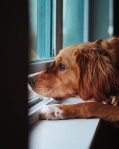 Teach your dog to be home alone